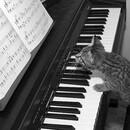 piano_bustard