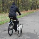 Велособаководы