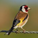 Бёрдвотчинг (наблюдение за птицами)
