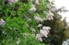 в Яузский лесопарк через Ботанику -ВДНХ- Леоново -Ростокинский акведук