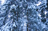 Открытие лыжного сезона с М.А.О. и Снегозависимостью