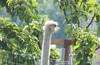 ПВД1Д Балабаново - Парк птиц - Жуков - Серпухов ~ 106 км