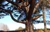 07 Ноября Грандиозное Закрытие Летнего сезона 2015 на Лохином острове