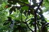 Фондовая оранжерея Ботаники - 2