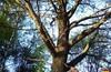 Смотровая площадка МГУ — 7-ая Светлая выходная - Тропарёвский лесопарк