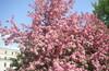 Московская весна! Часть 2