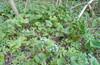 Трынь-трава, 5 мая (воскресение)