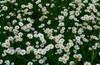 20.06.2015 Место встречи изменить нельзя Строгино-Звенигород