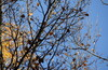 Ботаника- ВДНХ- Леоновская  парк - Сад будущего и обратно