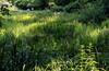 Пруды и поляны Ботанического сада