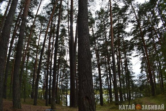 http://katushkin.ru/imgcache2/photo-580x350/63/af/aa6900bc06d5b91e4c6bb71563c4-593474.jpg