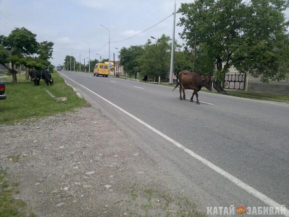 http://katushkin.ru/imgcache2/photo-580x350/7b/7a/9c0678faabbc1a3d26fdf21310c9-403831.jpg