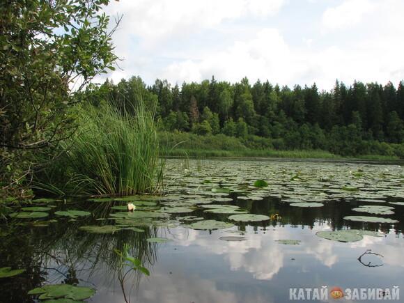 http://katushkin.ru/imgcache2/photo-580x350/a4/c4/075b73875493a435824aafc25173-590968.jpg