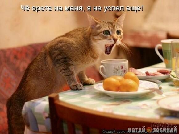 http://katushkin.ru/imgcache2/photo-580x350/a9/21/e59253cc28fc8fee672dd835cea2-562774.jpg