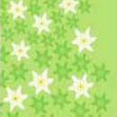 Велосипед Wind X-treme Edelweiss green
